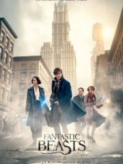 Download Film Fantastic Beasts and Where to Find Them BluRay Subtitle Indonesia